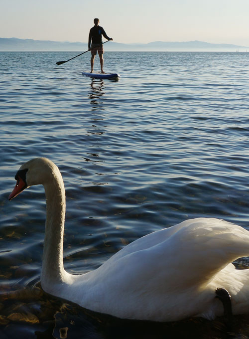 Stand Up Paddle Board Experte mit SUP Test